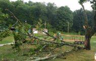 Storms Leave Residents Without Power And Trees Down
