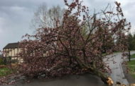 Storms Uproot Trees, Bring Down Wires