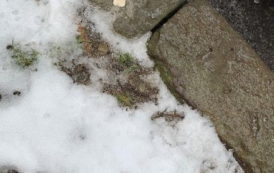 Freezing Drizzle Causes Morning Slick Spots
