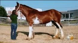 Clydesdale Still Missing From Sarver Home