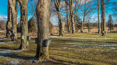 Penn Township Nature Park to Host Maple Sugaring Event
