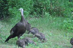 Deadline Coming For Turkey Hunters' Reports