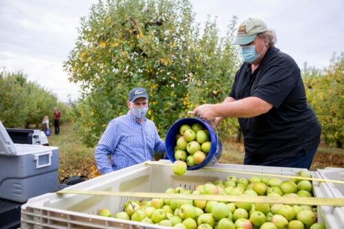 Gleaning Helps Charitable Food System
