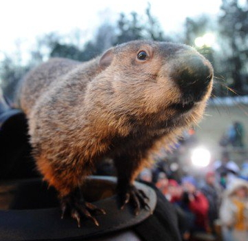 Pennsylvania's Most Famous Groundhog Sees Shadow: 6 More Weeks Of Winter