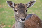 Game Commission To Deepen Efforts On Chronic Wasting Disease