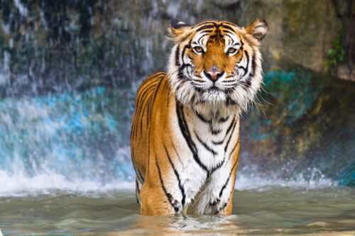 Judge Rules In Favor Of Pittsburgh Zoo For Asian Lantern Fest